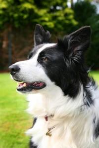 Kerry Pet Photography